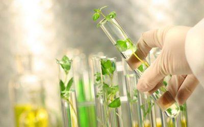 Beneficios de la medicina natural en comparación con la medicina alopática o de síntesis